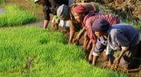 AFRIQUE : une charte sur l'agroécologie voit le jour ©Pierre Jean Durieu/Shutterstock