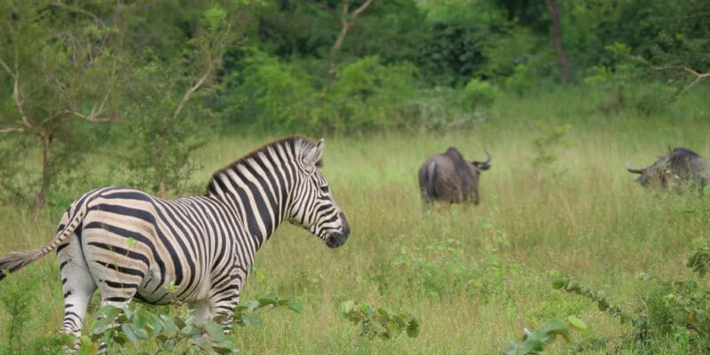 TOGO: UNDP funds eight CSOs for environmental conservation ©Travel Telly/Shutterstock