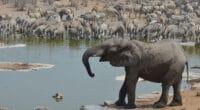 AFRIQUE AUSTRALE : la FAO et l'AFD lancent un projet de gestion durable de faune© PETER HATCH/Shutterstock