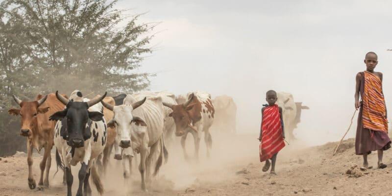 KENYA : confronté à la sécheresse, l'État va restaurer des terres dans 11 comtés© Katiekk/Shutterstock