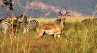 AFRIQUE : la philanthropie pour pallier le déficit de financement de la biodiversité©Chaton Chokpatara/Shutterstock