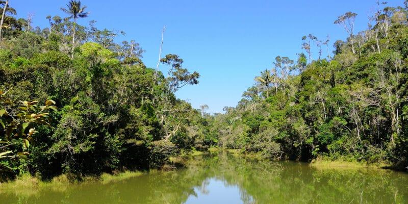 MADAGASCAR: World Bank allocates $50 million to fight deforestation© Hajakely/Shutterstock