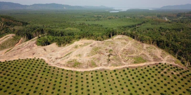 COTE D'IVOIRE : Sifca et Satelligence s'allient pour l'objectif «zéro déforestation»©Rich Carey/Shutterstock