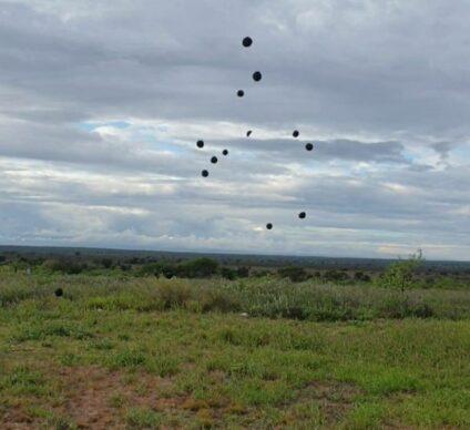 KENYA: Seedballs offers