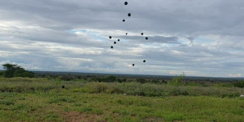 "KENYA: Seedballs offers ""seed bombs"" for reforestation of the land ©SeedballsKenya/Shutterstock"