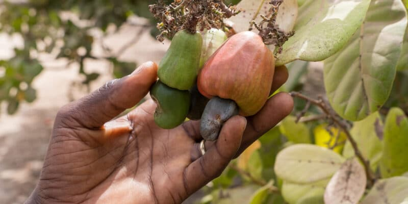 AFRICA: ACF secures $115m syndicated loan for sustainable agriculture © Salvador Aznar/Shutterstock