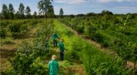 AFRIQUE : la BAD et Ottawa lance un fonds pour le financement du climatique © henrique ferrera/Shutterstock