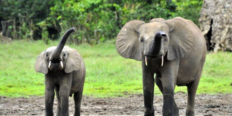 CONGO: the Biodev 2030 project to halt the decline in biodiversity ©Sergey Uryadnikov/Shutterstock