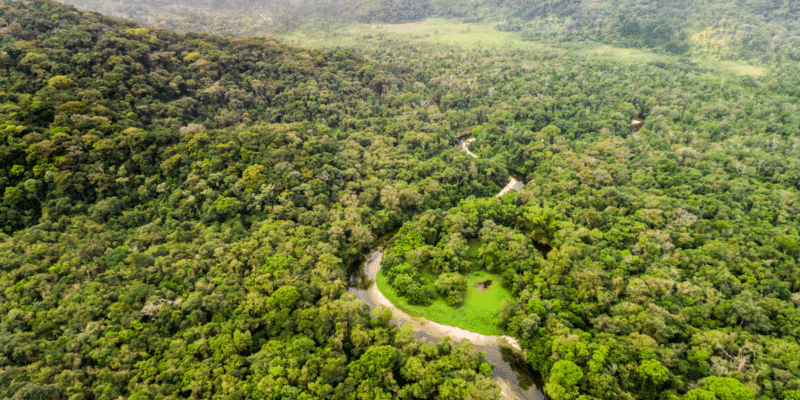 CENTRAL AFRICA: the 6th phase of Ecofac, plagued by lack of coordination©Gustavo Frazao/Shutterstock