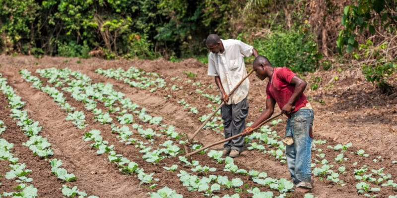 AFRICA: IFAD and IsDB finance climate change adaptation in rural areas © Andre Silva Pinto/Shutterstock