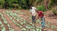 AFRIQUE : le Fida et la BID financent l'adaptation au changement climatique en milieu rural © Andre Silva Pinto/Shutterstock