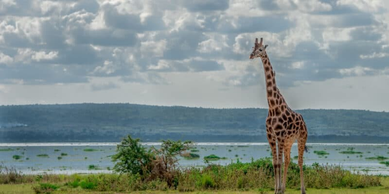 UGANDA: Kampala gives green light for oil development in Lake Abert ©Brina L. Bunt/Shutterstock