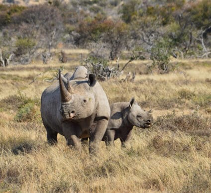 SOUTH AFRICA: A bond issue for the preservation of black rhinos © Cathy Withers-Clarke/Shutterstock