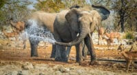 AFRIQUE AUSTRALE : l'AFD lance un appel à candidatures pour des projets pro-nature © Simone Crespiatico/Shutterstock