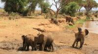 BOTSWANA : le gouvernement va abattre 287 éléphants d'ici la fin du mois de septembre©John Lindsay-Smith/Shutterstock