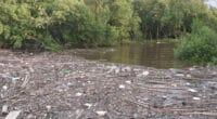 GABON : Libreville a perdu 70 hectares de mangrove en trois ans©Teeratas/Shutterstock