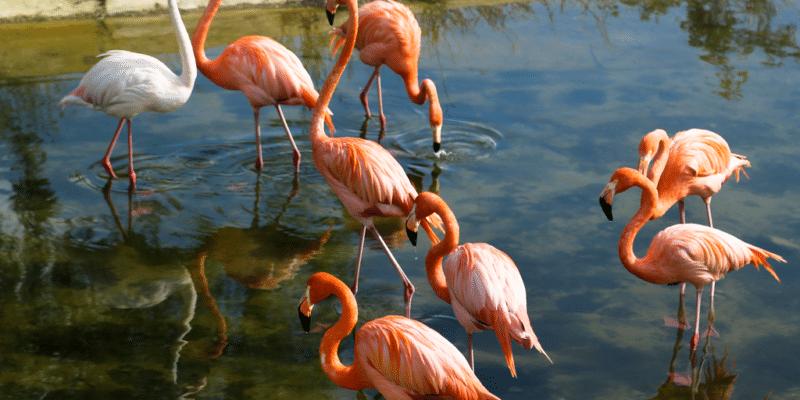 TUNISIA: the development of the Sijoumi lagoon divides©MariaKovaleva/Shutterstock