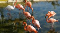 TUNISIE : l'aménagement de la lagune de Sijoumi divise©MariaKovaleva/Shutterstock