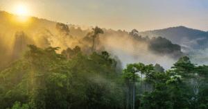 CAMEROON: Camvert and the forest peril in the Congo basin©BorneoRimbawan/Shutterstock
