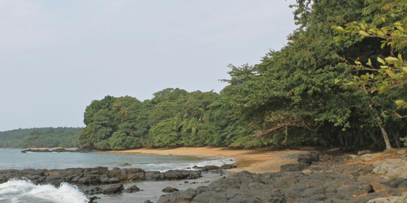 CAMEROUN : Camvert et le péril forestier dans le bassin du Congo© Cesar J. Pollo/Shutterstock