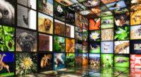AFRIQUE : le 5e « AFD Digital Challenge » porte sur le climat et la biodiversité ©luisrsphoto/Shutterstock