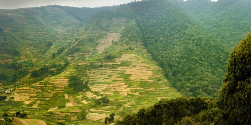 DRC: Urgent need to reverse wildlife habitat loss©Martin Mecnarowski/Shutterstock