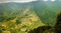 RDC: l'urgence d'inverser la diminution de l'habitat des animaux sauvages©Martin Mecnarowski/Shutterstock