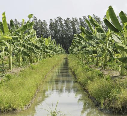 KENYA : l'ADC achève la 1èrephase d'un projet d'irrigation de 30,3 M$ à Taita Taveta©Mr.Kanomcrok/Shutterstock