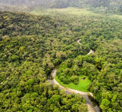 DRC: the PPFNC, for integrated and sustainable forest management in the north of the country©Gustavo Frazao/Shutterstock
