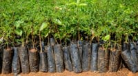 CAMEROON: CIFOR promotes agroforestry and plants 100,000 trees in Lékié©Dennis Wegewijs/Shutterstock