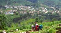 BURUNDI : le FEM finance la restauration des terres agricoles à Kayanza© fivepointsix/Shutterstock