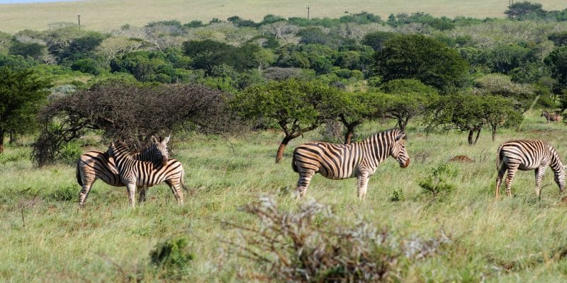 AFRIQUE : les concepts au cœur du débat sur la biodiversité© Chaton Chokpatara/Shutterstock