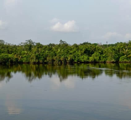 CONGO: REDD+ to reduce CO2 emissions and preserve forests © Bogdan Skaskiv/Shutterstock