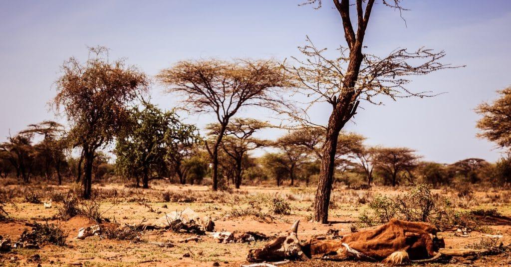 Biodiversité en Afrique : 10 chiffres, 10 enjeux©Geertes/Shutterstock