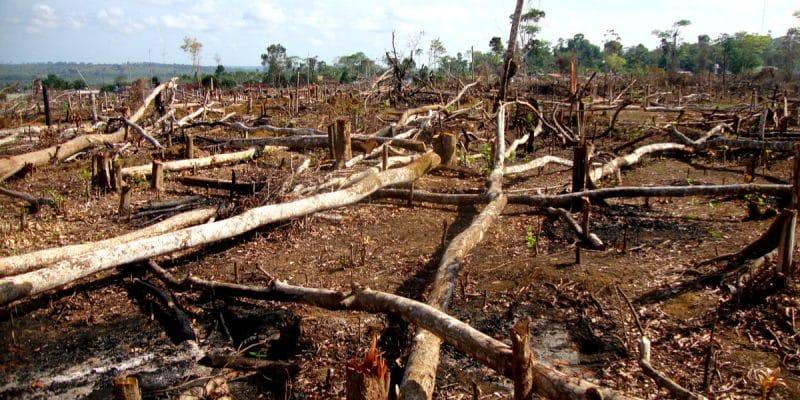 "IVORY COAST: human pressure on biodiversity, the ""Anthropocene"" era©Tarcisio Schnaider/Shutterstock"