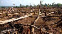 COTE D'IVOIRE : pression de l'homme sur la biodiversité, l'ère de l'«Anthropocène»©Tarcisio Schnaider/Shutterstock
