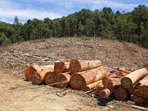 Deforestation threatens the Congo Basin © MD_Photography /Shutterstock