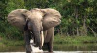 Biodiversité en Afrique : 10 chiffres, 10 enjeux© Michal Varga/Shutterstock