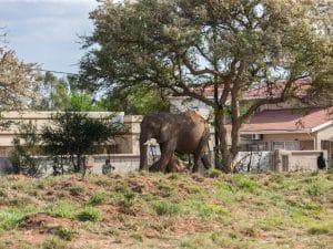 Au Botswana, les éléphants ne connaissent pas de frontières © Lucian Coman/Shutterstock