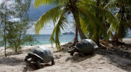 SEYCHELLES: EU and OEACP fund biodiversity conservation in Aldabra©Altrendo Images/Shutterstock