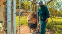 AFRIQUE DU SUD : le gouvernement interdit l'élevage de lions en captivité©schusterbauer.com/Shutterstock