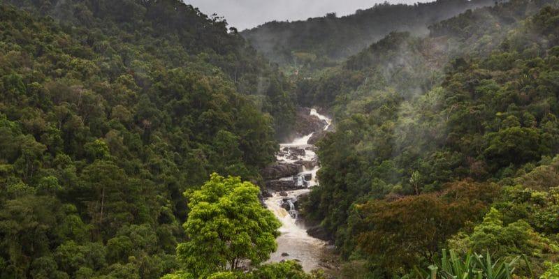 L'Afrique au défi de la préservation de sa biodiversité© Luca Nichetti/Shutterstock