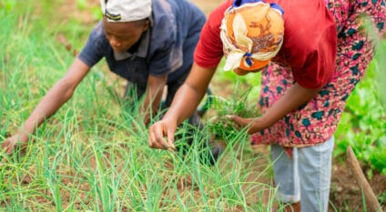 AFRICA: TFTC initiative for youth and women's climate resilience Kwame Amo/Shutterstock