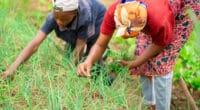 AFRIQUE : l'initiative TFTC pour la résilience climatique des jeunes et des femmes Kwame Amo/Shutterstock