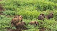 KENYA : quand éléphants et avocatiers se disputent la vallée du Rift©Danita Delimont/Shutterstock