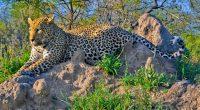 Cinq acteurs clés s'engagent pour la biodiversité en Afrique © Alberto Carrera/Shutterstock