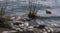 GHANA : le programme AEHPMP pour réduire la pollution par le mercure et les e-déchets©Wirestock Creators/Shutterstock