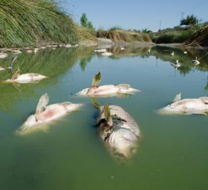 GHANA : l'UMaT propose une stratégie de dépollution des plans d'eau ©Jason Mintzer/Shutterstock