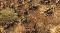 AFRIQUE : African Parks obtient 108 M$ pour la gestion de ses parcs nationaux © African Parks