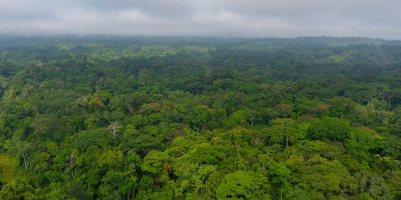 GABON: Libreville Receives $17 Million from CAFI as a Model for Forest Preservation © CAFI